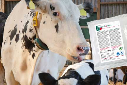 orgacell sc start – providing energy and live yeast to get the cow back into shape after calving