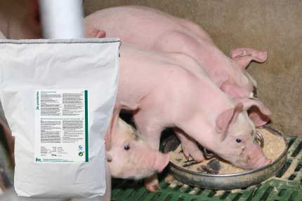 jbs prestarter – supplementary feed for suckling piglets
